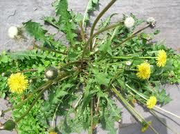 Non Toxic Weed Killer You Make At Home